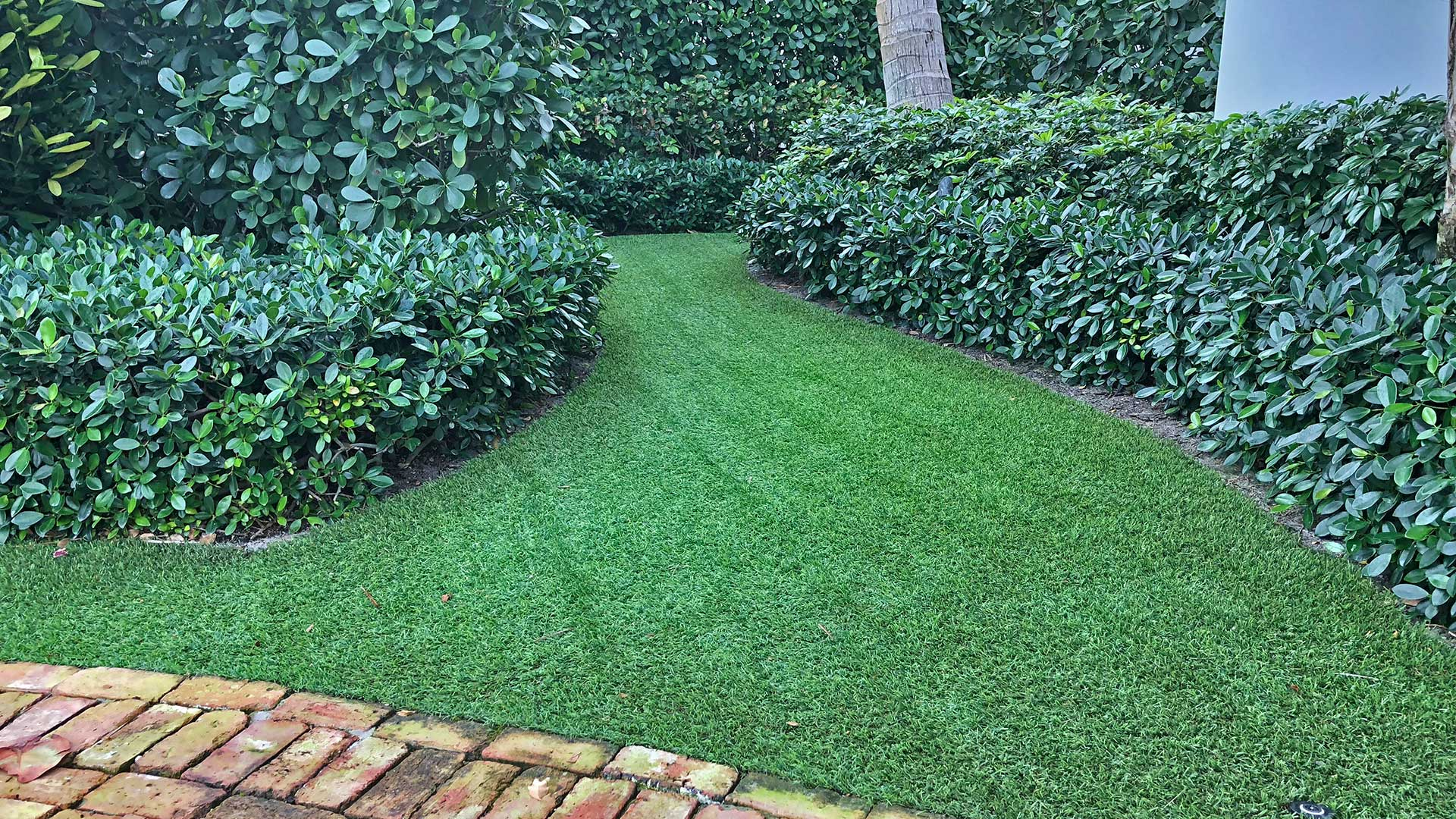 Artificial turf and landscape trimming at a home in Palm Beach, FL.