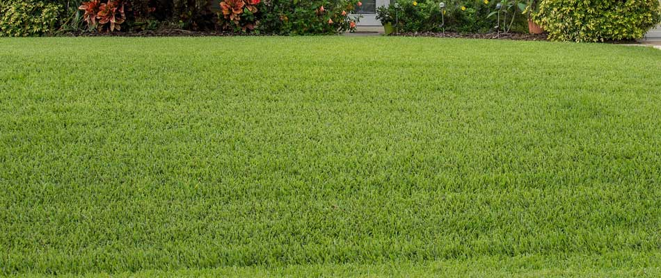 Lawn after verticutting and core aeration services.