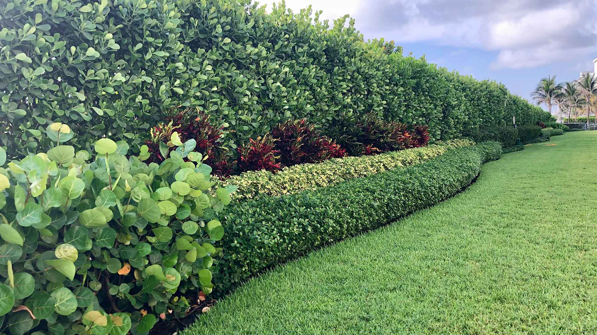 Our landscape trimming and pruning services for a property in Palm Beach, FL.