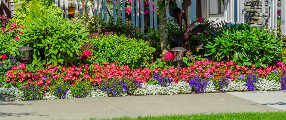 Popular Annual Flowers for Homes in Palm Beach, FL