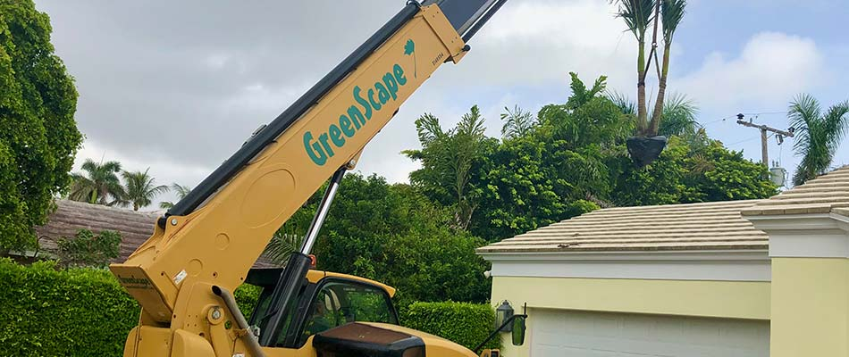 A Greenscape Design crane truck installing a palm tree at a Palm Beach, FL home.
