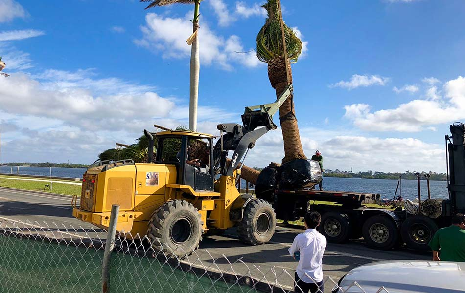 Landscaping workers installing palm tree at commercial property in Palm Beach, FL.