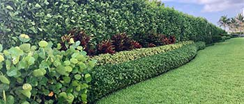 Freshly pruned and trimmed bushes in Palm Beach, FL.